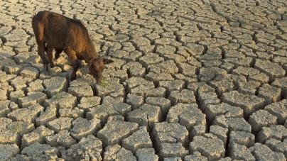 Türkiye İklim Senaryoları Korkutuyor