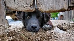 """""""Gönüllü"""" İşlere Karşı Zorunlu İşler Manifestosu: Sokak Hayvanları Örneği"""
