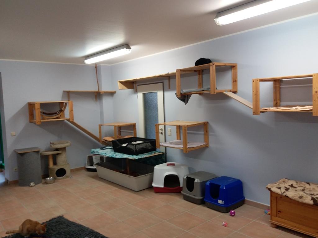 kedi odası 3