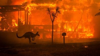 """""""Çevre"""" değil """"Ekoloji"""", """"İklim Değişikliği"""" değil """"İklim Krizi"""""""