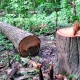 Hızlı Kentleşme ve Ormansızlaşmanın Ölümcül Virüslerle Bağlantısı