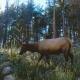 Helsinki biyolojik çeşitliliğin korunması için çalışıyor